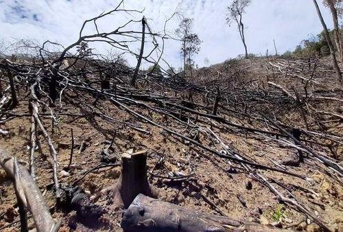 Khởi tố vụ chặt phá và đốt 2ha rừng đầu nguồn sông Bồ