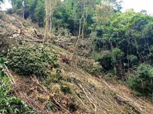 Gia tăng tình trạng phá rừng tự nhiên