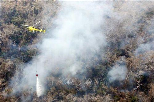 Cảnh báo cháy rừng ở Amazon làm trầm trọng hơn tình hình dịch bệnh COVID-19