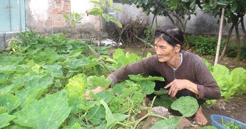 Trầm trồ với cụ bà gần 80 tuổi ở Hải Dương 'chưa một lần nằm viện' xin thoát nghèo