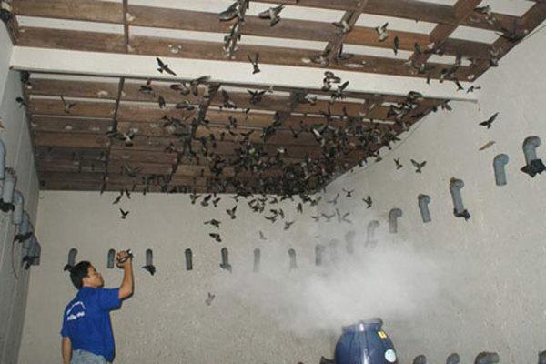 Điều kiện được xây nhà nuôi chim yến