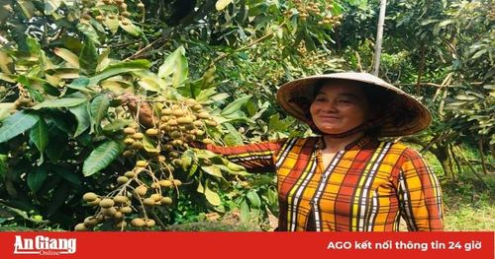 Mô hình trồng nhãn Ido kết hợp mít Thái