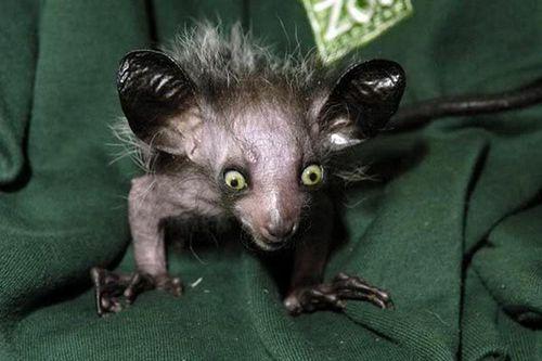 Top 7 loài động vật có vẻ ngoài gây ám ảnh như quái vật