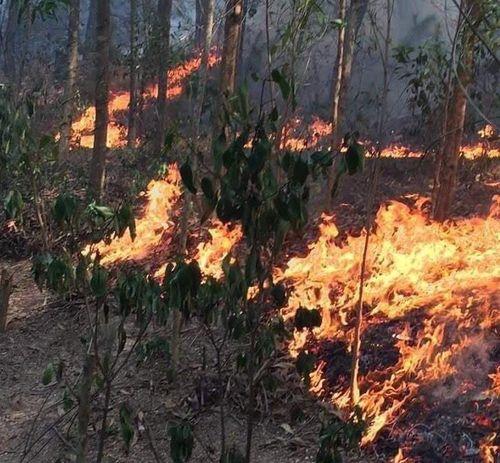 Cháy rừng thông nhiều năm ở Nghệ An