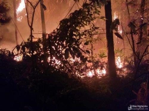 Thêm một rừng thông ở Diễn Châu bốc cháy trong đêm được dập tắt kịp thời