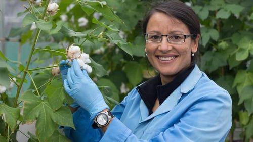 Australia nghiên cứu sản xuất bông nhiều màu sắc để bảo vệ môi trường