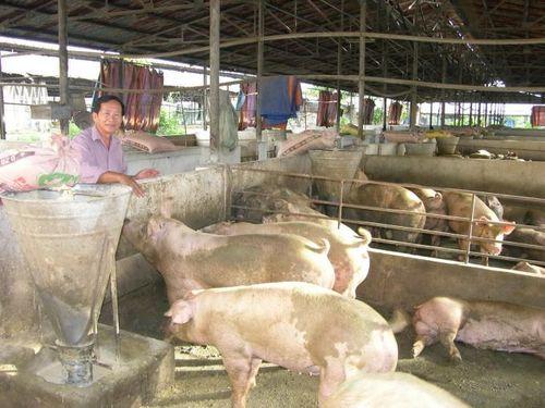 Bát nháo thị trường thức ăn chăn nuôi Tây Nguyên