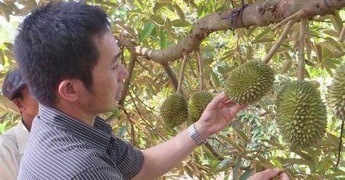 Trồng cây ăn quả từ... vùng tiêu chết