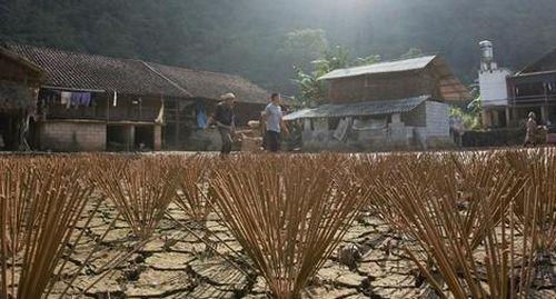 Độc đáo làng nghề làm hương truyền thống Phia Thắp, Cao Bằng