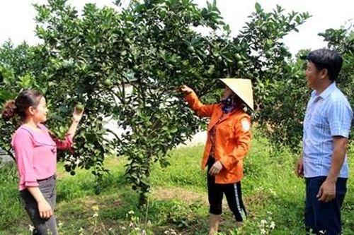 Huyện miền núi Vũ Quang tìm hướng đột phá để phát triển