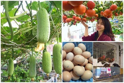 Mãn nhãn khu vườn trồng rau nuôi gà trên sân thượng giữa thủ đô