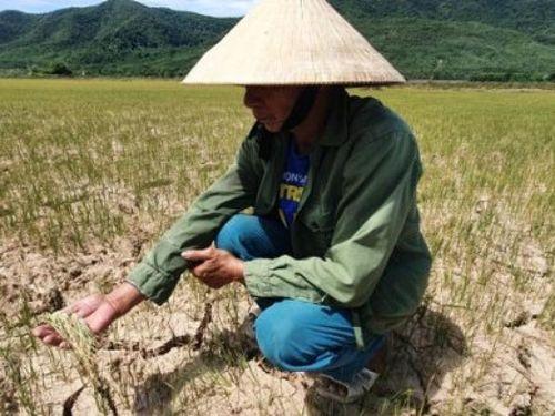 Nắng nóng gây ảnh hưởng đến sản xuất nông nghiệp các tỉnh miền Trung