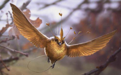 Chim Snidget - biểu tượng của trò Quidditch trong Harry Potter