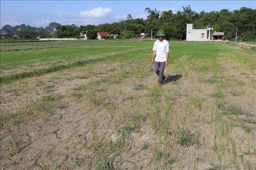 Ngành nông nghiệp 'vật lộn' với nắng hạn