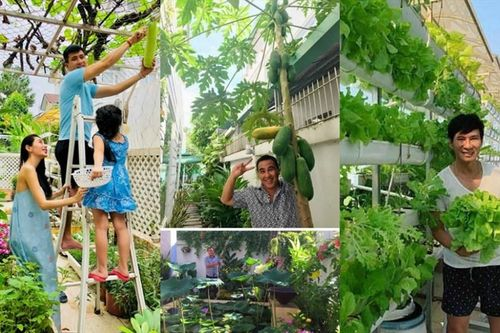 Vườn rau xanh tốt trong biệt thự triệu đô của các sao Việt hạng A