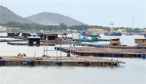 Ninh Thuận mở hướng cho nghề nuôi trồng thủy sản trước thời cơ mới