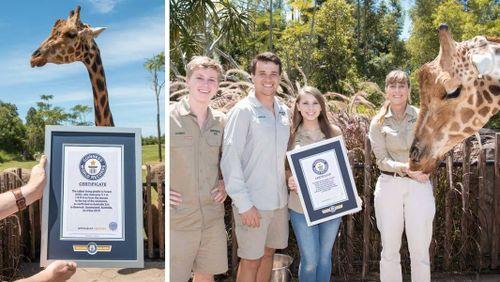 Hươu cao cổ cao nhất thế giới lập kỷ lục Guiness đáng kinh ngạc