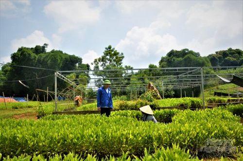 Tuyên Quang: Đẩy nhanh tiến độ trồng rừng
