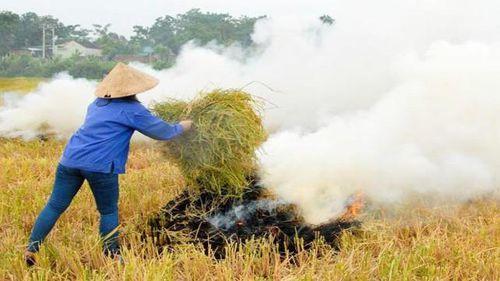 Vì sao nông dân vẫn đốt rơm rạ?