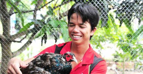 Trang trại chim trĩ, gà Quý Phi độc đáo ở Cần Thơ