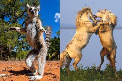 Săn ảnh động vật hoang dã cực độc ở nơi nguy hiểm nhất hành tinh