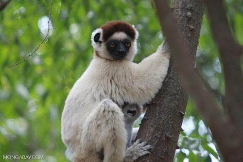 Top 10 động vật có nguy cơ biến mất mãi mãi