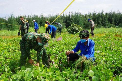 Trồng 5.000 cây phi lao chắn sóng ven biển huyện Tân Phú Đông