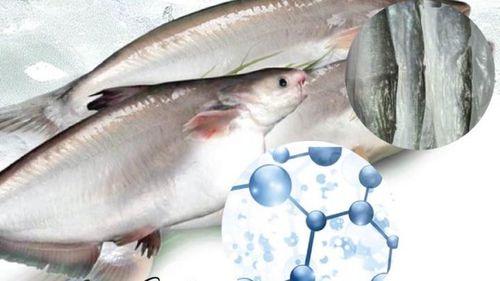 Da cá tra: Nguồn collagen dồi dào của người Việt