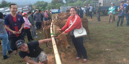 Huyện Bá Thước vươn mình thoát nghèo - Bài 1: Khi con bò là đầu cơ nghiệp