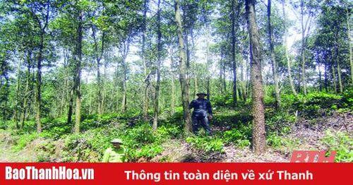 Khát vọng rừng xanh - Bài 2: Nghề rừng và những bước chuyển mình