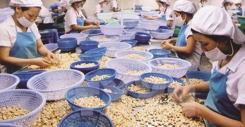 Xuất khẩu điều sẽ tăng cả lượng và giá trong quý IV