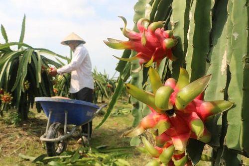 Truy xuất nguồn gốc phục vụ xuất khẩu nông sản sang thị trường Trung Quốc