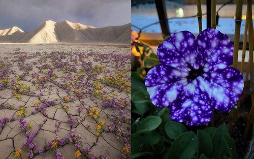 10 khoảnh khắc kỳ diệu của tự nhiên nhất định phải xem để mở mang tầm mắt