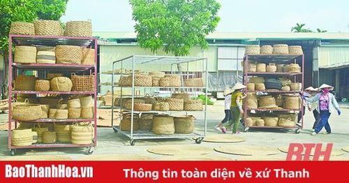 Các sản phẩm từ cói Nga Sơn vươn mình ra thị trường thế giới