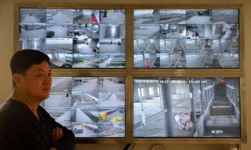 Nuôi lợn bằng trí tuệ nhân tạo ở Trung Quốc
