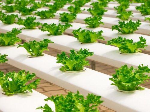 Thành công với mô hình Nông trại xanh