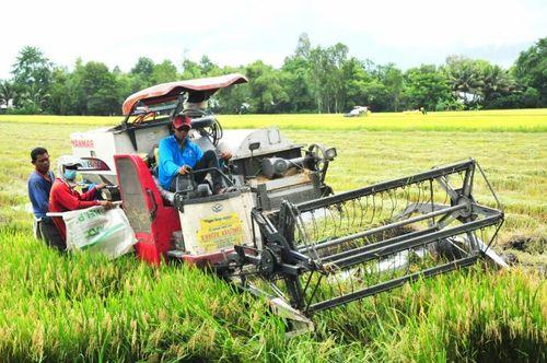 Vực dậy hợp tác xã nông nghiệp: (Bài 1) Nhân tố thúc đẩy sản xuất