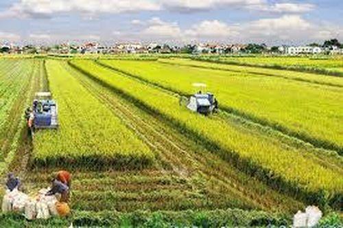 Một số ý kiến nhằm hoàn thiện các quy định về thừa kế quyền sử dụng đất nông nghiệp ở nước ta hiện nay