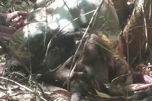 Bắt thủ phạm bắn chết bò tót quý hiếm ở rừng Mã Đà