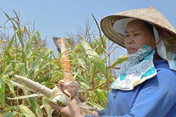 Tin tức Tây Nguyên: Khoai tây, hành tây Đà Lạt rủ nhau giảm giá