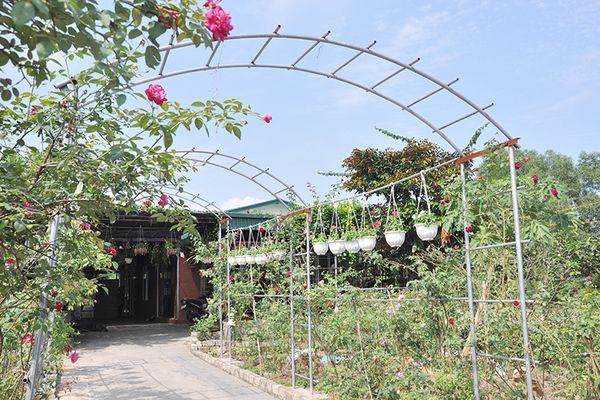 Vườn hồng cổ và ý tưởng xây dựng khu du lịch sinh thái