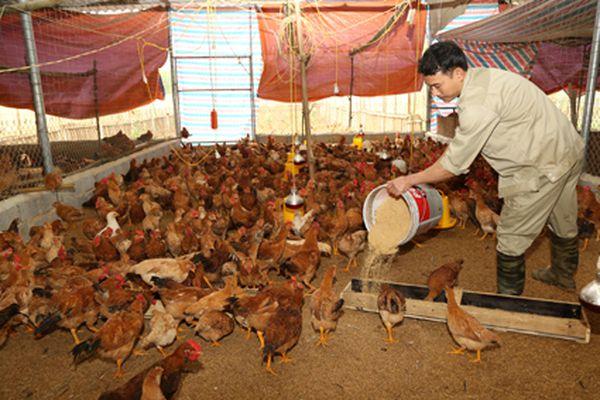 Nghị quyết 37 của HĐND tỉnh: Tạo đà đưa sản xuất nông nghiệp hàng hóa phát triển bền vững
