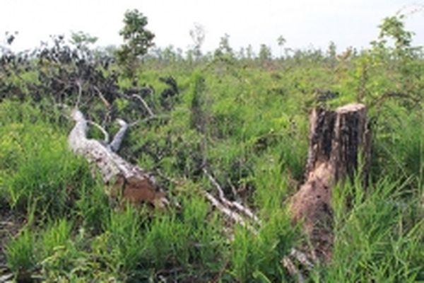 Khởi tố các đối tượng hủy hoại rừng ở Đác Lắc