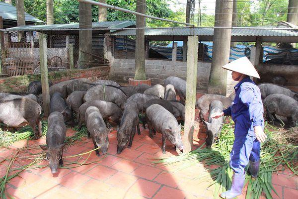 Hà Nội thành lập Trung tâm Phát triển nông nghiệp