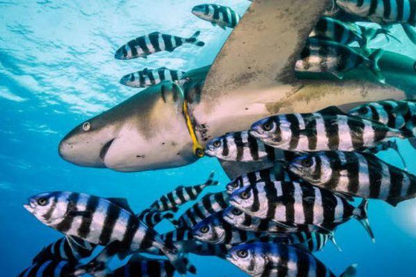Ảnh động vật: Cá heo yêu nồng nhiệt, cá vàng phố Hà Nội...