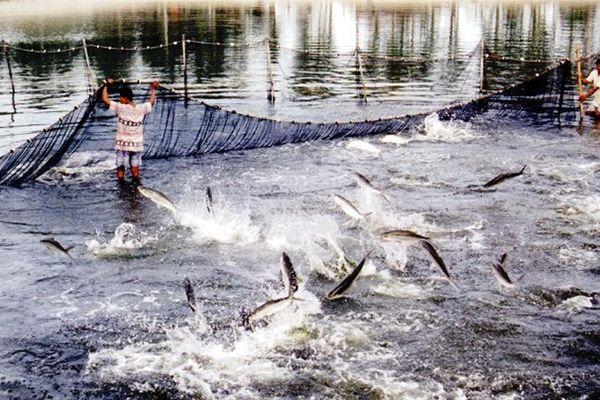 Thủy sản hướng đến phát triển bền vững