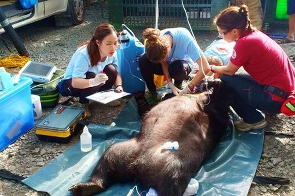 Bàn giao cá thể gấu ngựa nuôi nhốt ở Bến Tre
