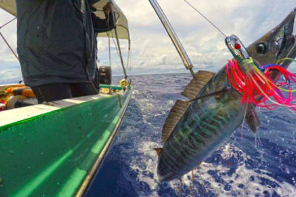 'Mafia thủy sản' tàn phá các quốc đảo