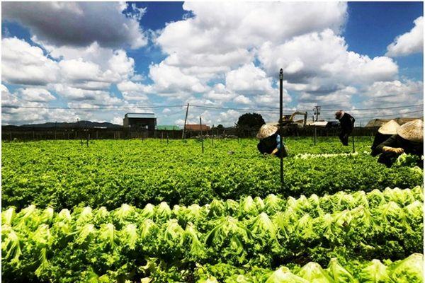 Nhận giải thưởng 'Doanh nghiệp vì nhà nông'