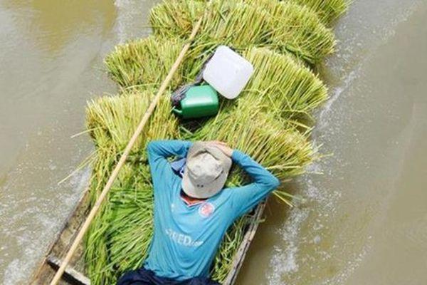 Đi chợ cỏ Ô Lâm